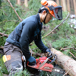 Work in the forest Lumberjack Experience